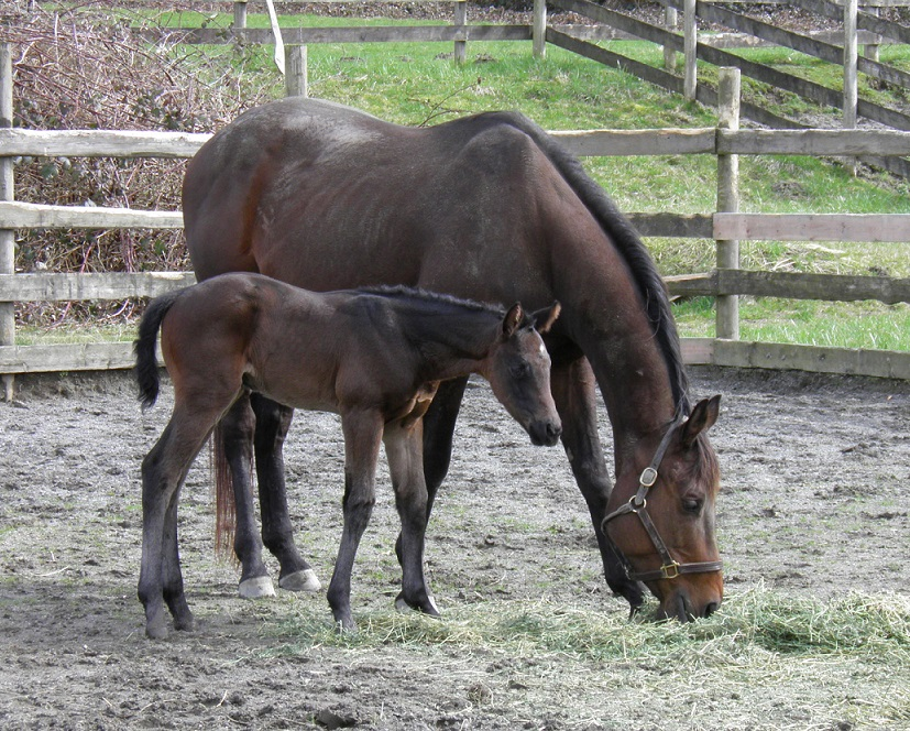 Golden Roar and Foal